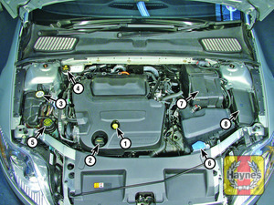 Illustration of step:  2 - Underbonnet check points - step 4